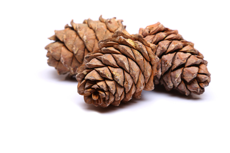 Three cedar cones isolated on a white background