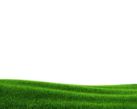 Green grass field (3d rendering) Stock Photo - 5643509