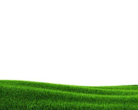 Green grass field (3d rendering) Stock Photo - 5643509