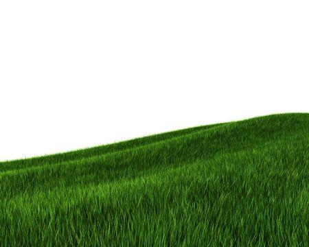 Green grass field (3d rendering) Stock Photo - 5643508