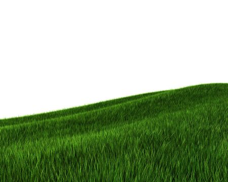 Green grass field (3d rendering) Stock Photo - 5643508