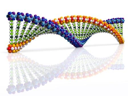 genome: DNA  Stock Photo