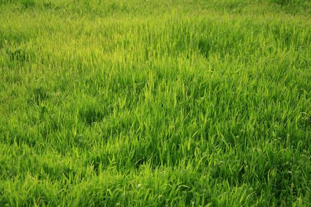 Photo of a green glade with a young grass-is possible to use as a background for illustrations and collages Stock Illustration - 2954794