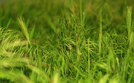 Photo of a green glade with a young grass-is possible to use as a background for illustrations and collages Stock Illustration - 2954732