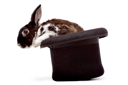 Cute dappled rabbit sitting in a black magicians hat photo