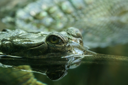 dangerously: Eye of a crocodile Stock Photo