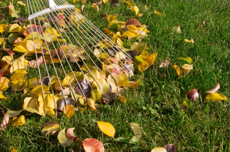 raking the leaves photo