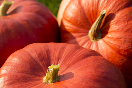 closeup of three pumpkins