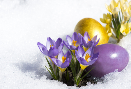 two Easter Eggs with yellow and purple crocuses