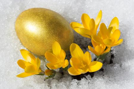 Osterei mit gelben Krokusse Standard-Bild - 65718904
