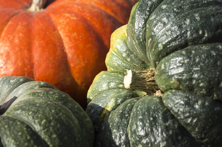orange and green pumpkin close-up