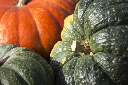 Orange und grün Kürbis close-up Standard-Bild - 65718939