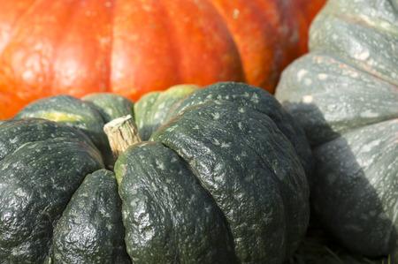 orange and green pumpkin close-up