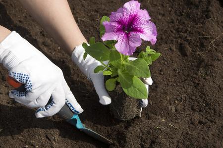 Blumen pflanzen Standard-Bild - 65719638