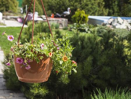 cachepot with orange and purple flowers Standard-Bild