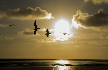 sunset with flying seagull