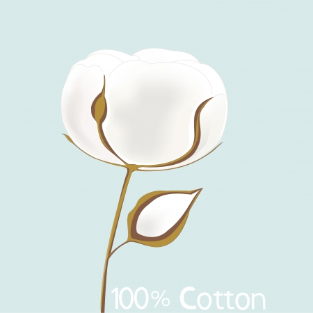 cotton plant: Illustration of white cotton Illustration
