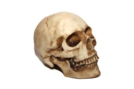 brainpan: brainpan cranium death s head