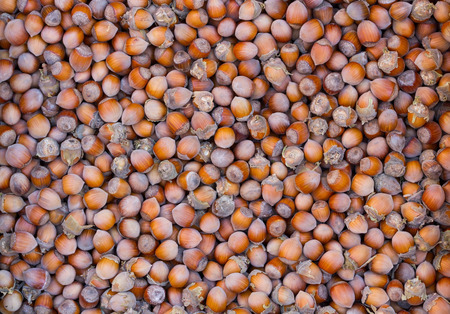 untreated: Fresh untreated in the skin of the hazelnuts. Natural background texture.