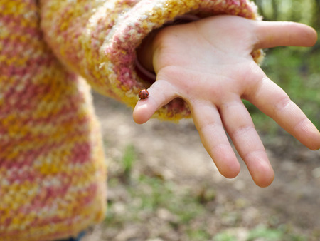 child's: ladybug in a childs hand. Spring nature. Stock Photo
