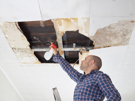damaged roof: man cleaning mold on ceiling.Ceiling panels damaged  huge hole in roof from rainwater leakage.Water damaged ceiling . Stock Photo