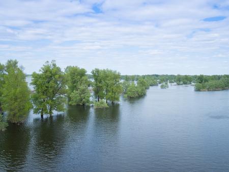catastrophe: Flood river flow, spilled  forest trees after big thunderstorm. Nature disasters,catastrophe,rainstorm.