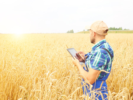 Farmer in a plaid shirt controlled his field and working at tablet.  Wheat harvest. Agriculture.