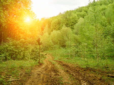 dense forest: The trail is beautiful dense forest. Forest landscape. Stock Photo
