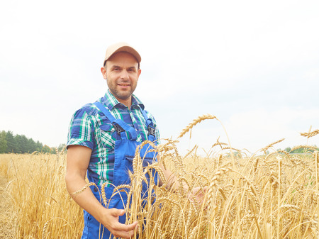 Farmer in a plaid shirt controlled his field.. Shows the wheat harvest. Agriculture.