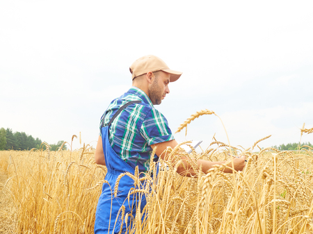 Farmer in a plaid shirt controlled his field and writing notes.  Wheat harvest. Agriculture.