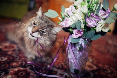 Funny cat eating wedding bouquet Banco de Imagens