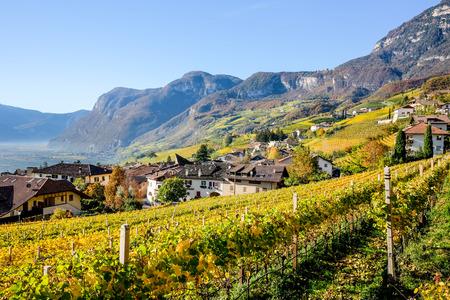가을의 Cortaccia, Strada del Vino, South Tyrol 스톡 콘텐츠