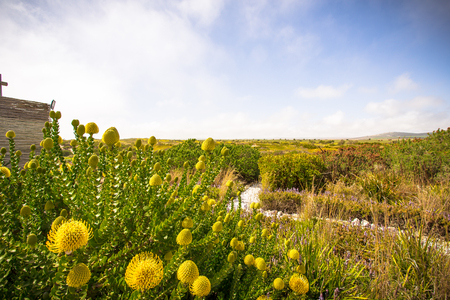 Landscape with protea, paternoster Stock Photo