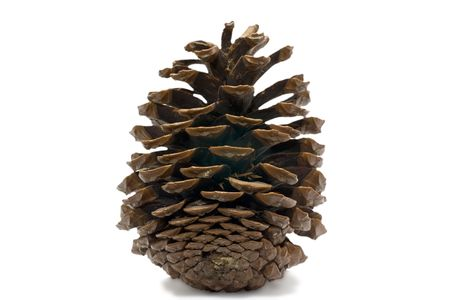cedar cone isolated on white Stock Photo - 4693542