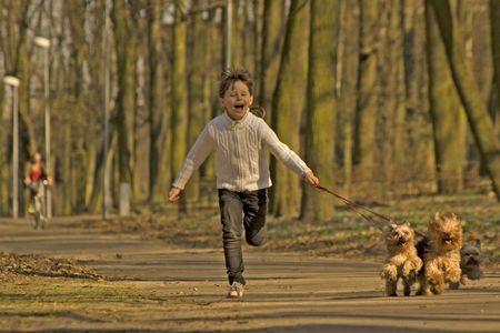 ein M�dchen von sechs Jahren l�uft mit Yorkshire-Terrier Lizenzfreie Bilder