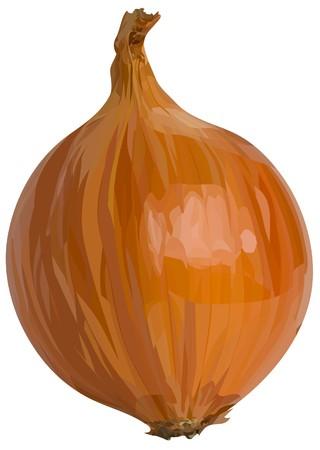 yellow_onion3 (17) .jpg Illustration