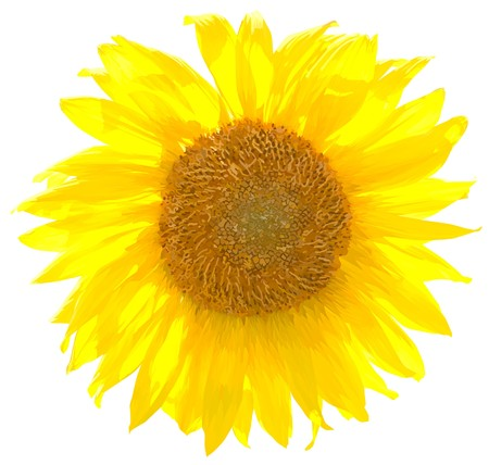 sunflower8(21).jpg
