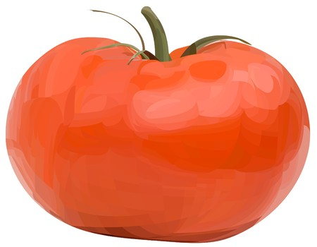 tomato1(11).jpg Stock Vector - 7502763