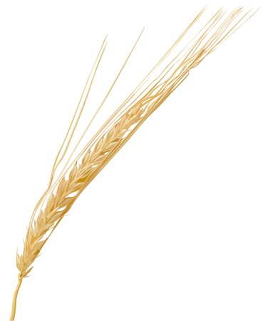 wheat3(57).jpg Stock Vector - 7502766