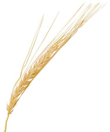 wheat3(57).jpg Stock Vector - 7502766