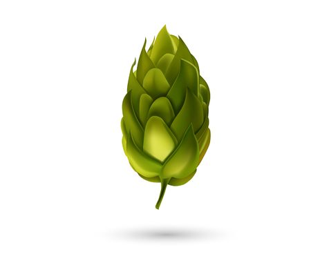 Young fir cone bud isolated on white background. Beer hop Vector illustration.