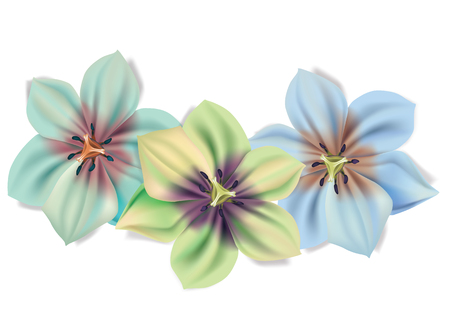Beautiful bouquet of flowers. Vector summer flowers isolated on white background. Blossom for flower design. Lilies in different colour.