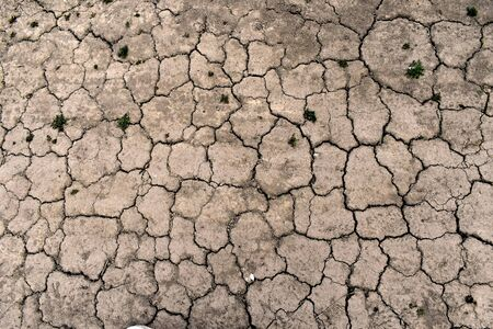 Dry gray earth in small cracks top view, small grass