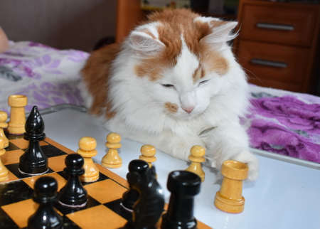 A game of chess, a cat playing with figures