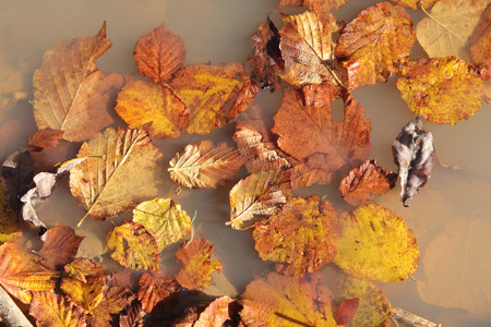 Autumn colorfulleaves in the puddle
