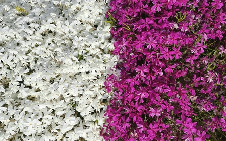 Colorful and bright spring flowers in botanical garden Archivio Fotografico