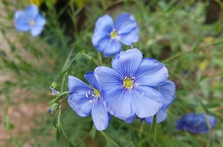 Fiori colorati e luminosi di primavera in giardino botanico Archivio Fotografico - 58483418