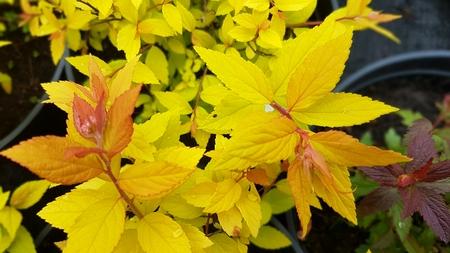 Fiori colorati e luminosi di primavera in giardino botanico Archivio Fotografico - 58483426
