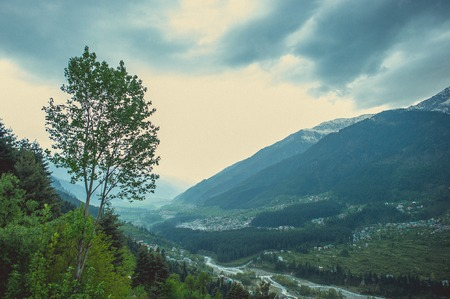 In the front: green tree on a background gray clouds creeping through the Kullu valley