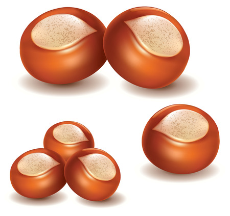 shea butter: nut Illustration